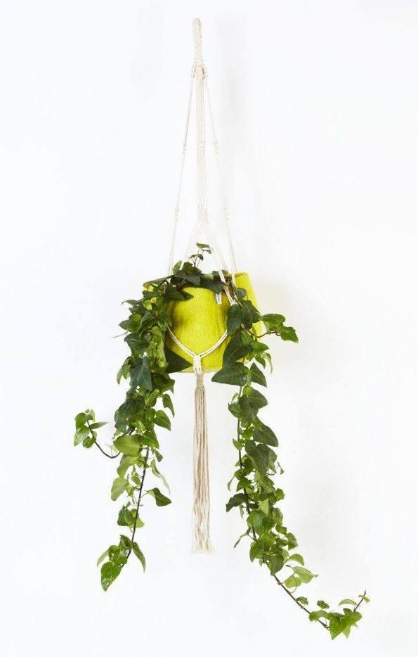 Alma de Alecrim - Loja Online - Suporte de suspensão para vaso - com planta