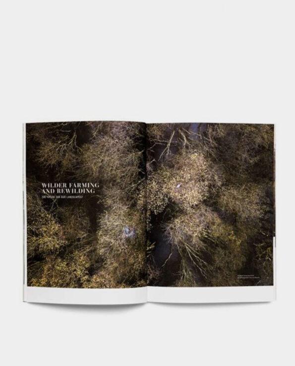 Alma de Alecrim - Página da Revista Seed #3